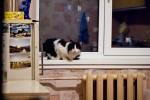 Василий на окне