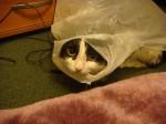 Вася в мешке
