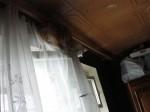Как Чувак лазает по шторе