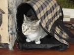 Алиска примеряет Фришкину сумку