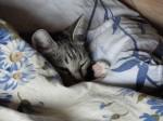Уютно на хозяйской подушке