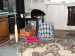 Кошки присматриваются друг к другу